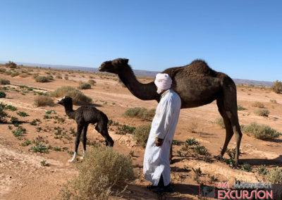 4x4 marrakech excursions70