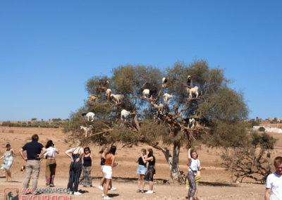 4x4 marrakech excursions75